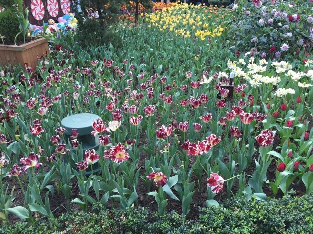 Tulipmania Singapore
